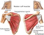 Anatomy of Rotator Cuff Muscle – Nerve Supply