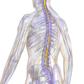 Types of Spinal Cord Injury