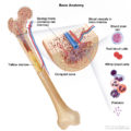 Chronic Lymphocytic Leukemia, Chronic Lymphocytic Leukemia – Symptoms, Treatment,