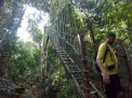 Ryan descending from the canopy walk. At the highest point we were probably 120 feet above the jungle floor.