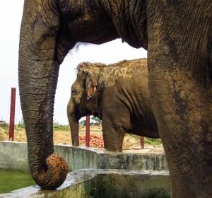 WSOS elephants4