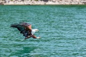 IMG_8870-African-Fish-Eagle