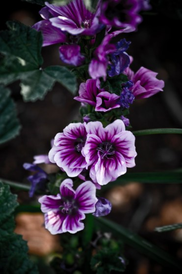 Untitled Plant 3