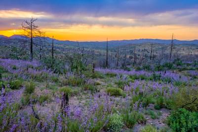 San Bernardino Mountains, California - Canon EOS 20D - Digital - December 2006