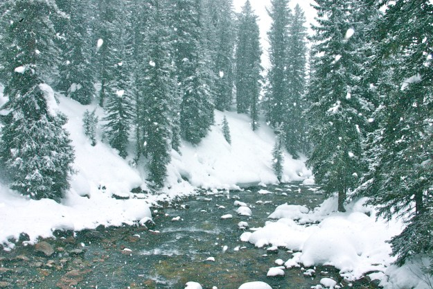 Granite Creek, Wyoming, Winter, Snow, Snowing, Forest, River, Pine Trees, Hot Spring