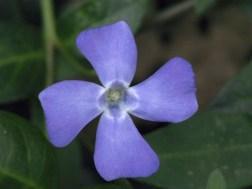 flowers 2002 048