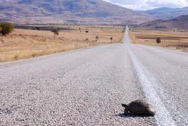 A turtle crossing the road