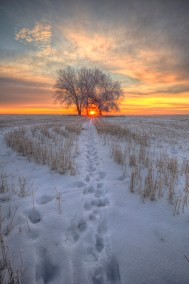 Walk towards the light