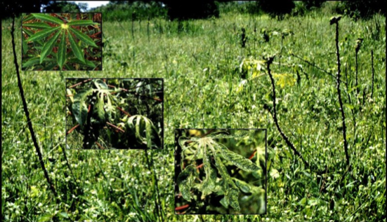 The REAL Top 10 for Plant Viruses (3/3)