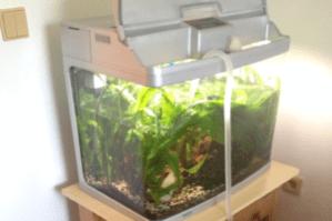 Stěhování akvária