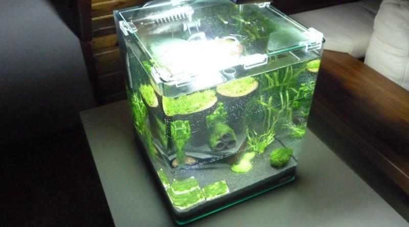 I takto může vypadat nano akvárium