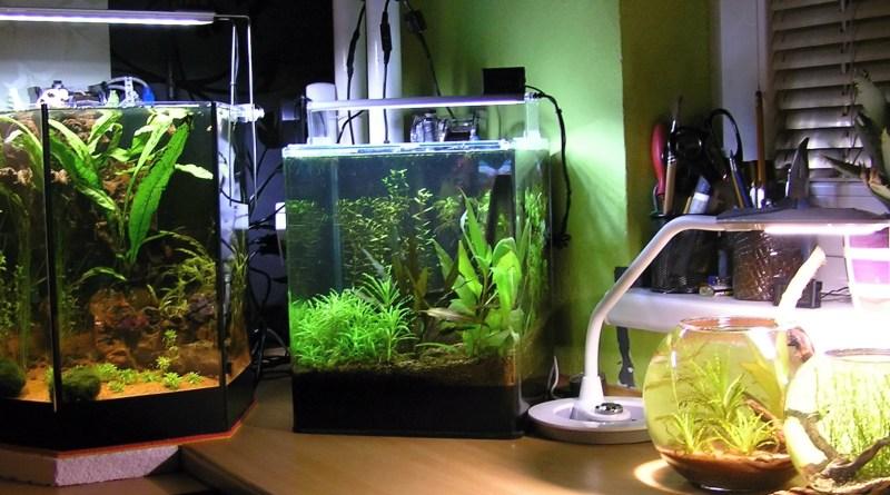 A tohle je můj koutek kde mám menší akvária a koule