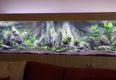 Vybíráme pozadí do akvária. Umělé, přírodní nebo jen tapeta?
