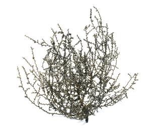 balecreekallen-tumbleweed