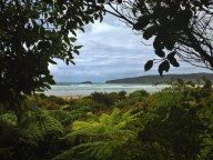 beach view from the bush