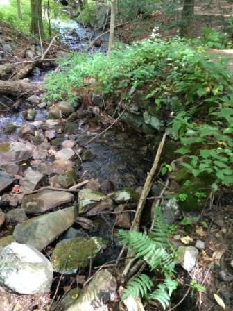 Spot Pond Brook