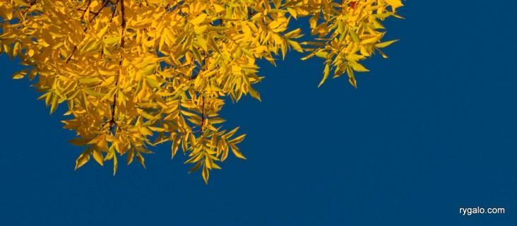 na żółto i na niebiesko
