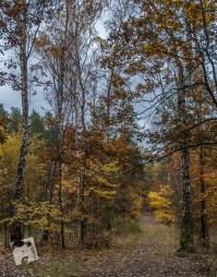 grabicz-jesienia-5131