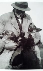 Fred Brackenbury, Alison's grandfather, feeding the lambs. Image reproduced courtesy of Alison Brakenbury.