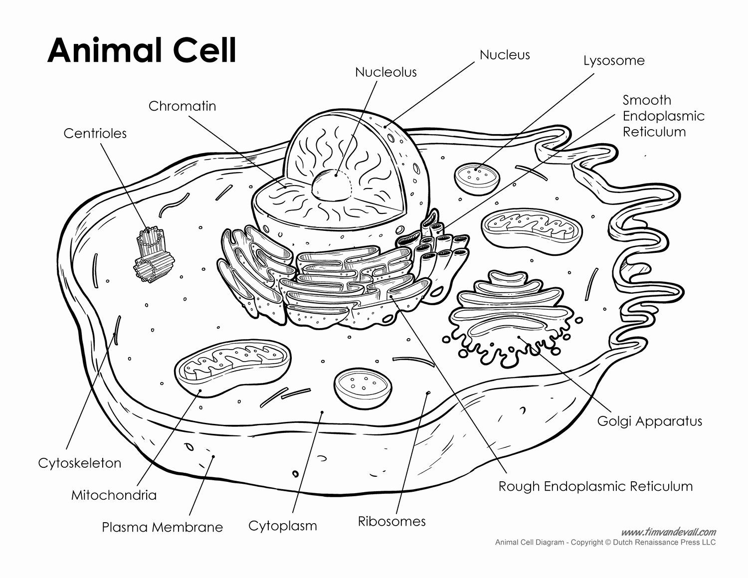 Cell Coloring Worksheet Answers Theme Library