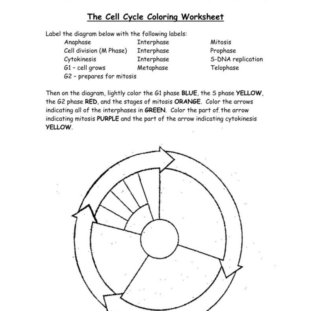 Dna Coloring Worksheet Answers Theme Library