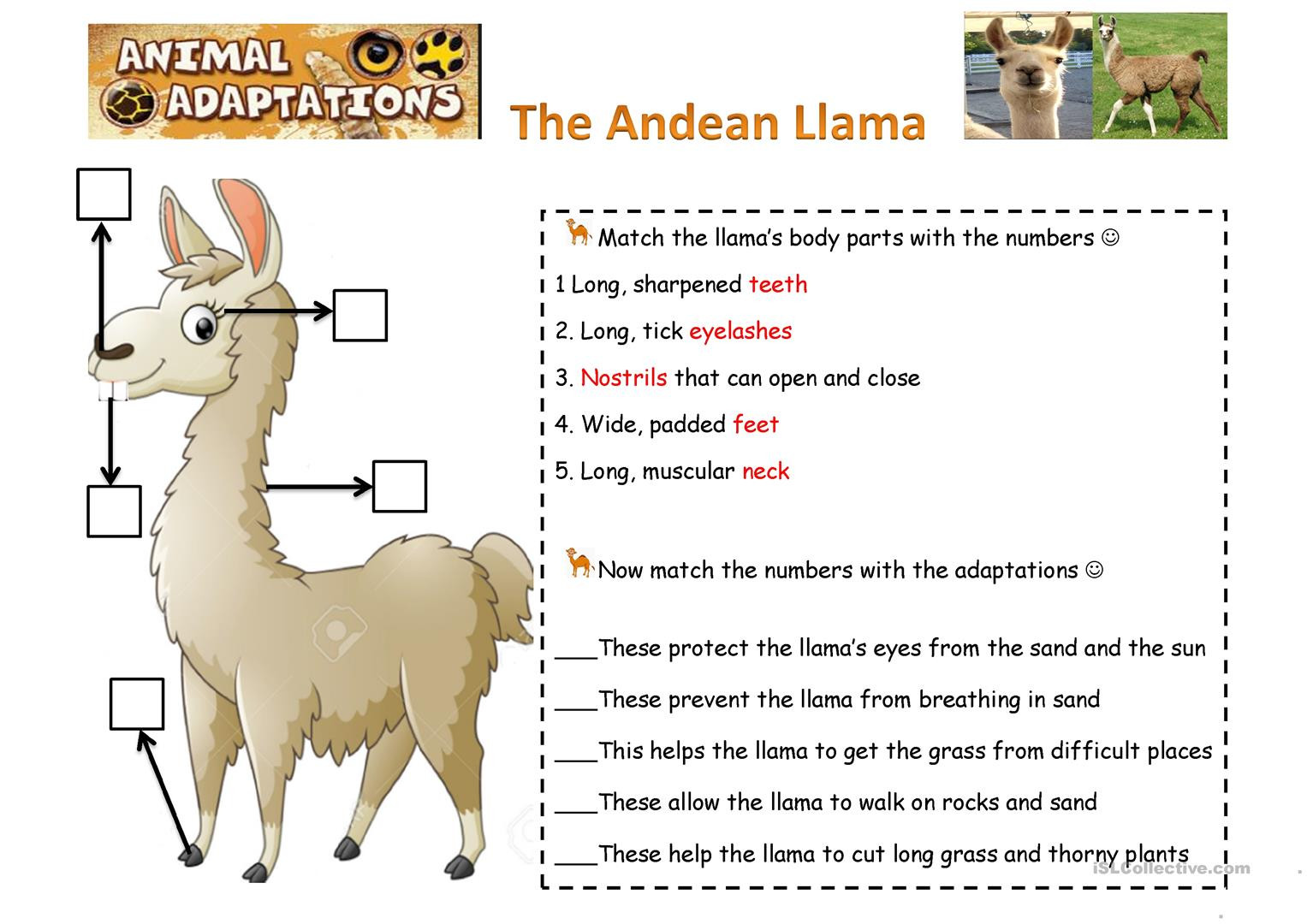 Plant And Animal Adaptations Worksheets Theme Library