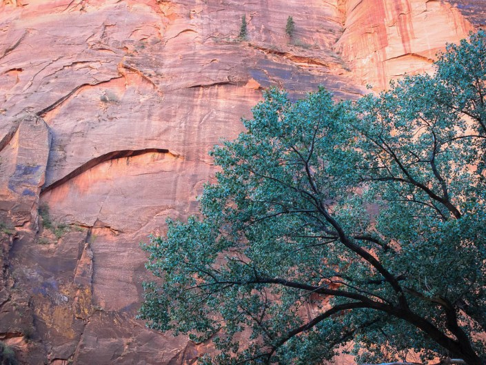 Green tree against pink stone formation