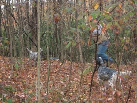Hunting English Setters
