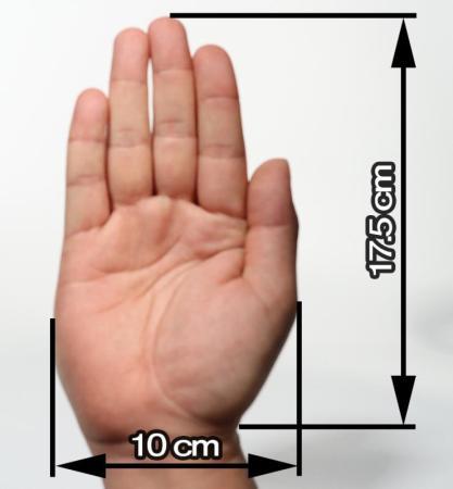 手の大きさ(参考)