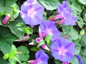 大福に咲く花