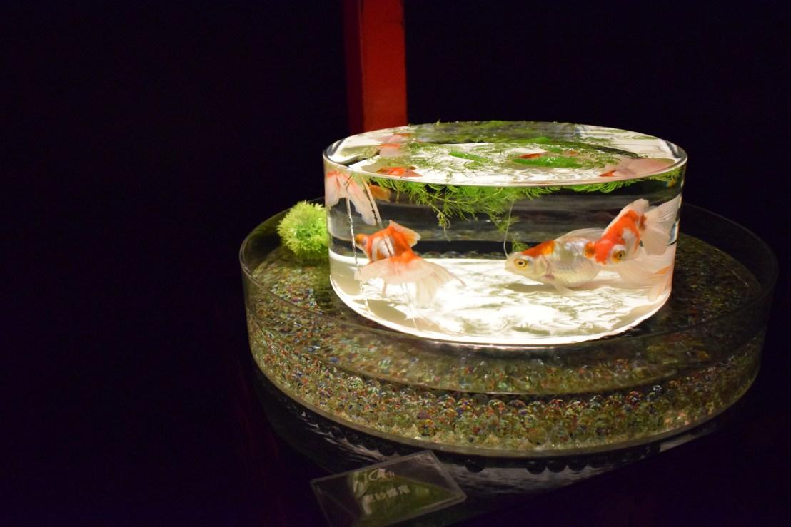 art exhibition in Tokyo, art aquarium