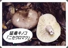 猛毒キノコ,ニセクロハツ