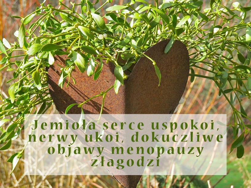 Męczy Cię arytmia serca a może menopauza daje popalić? Ta roślina może okazać się wybawieniem!