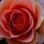 バラと十字の詩人たち「エリファス・レヴィ」とは