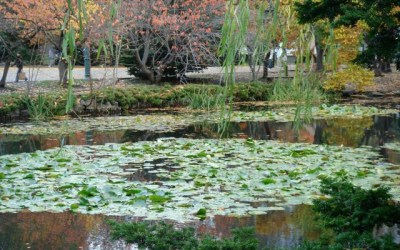 Relationship To Lotus Sutra – August 25, 2012 Meditation