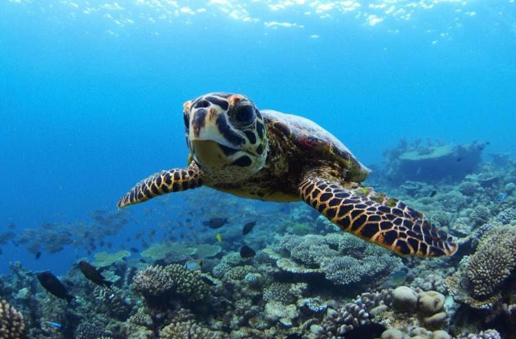 резорт мальдивы рифы