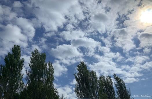 Nuages et arbres en mouvement