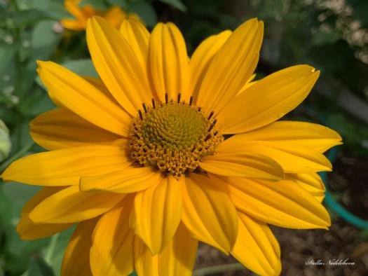 Fleur rayonnante