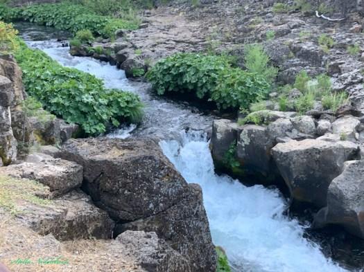 Cours d'eau dans la forêt californienne