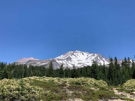 Mont Shasta en été