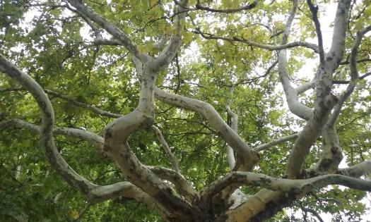 Les branches d'un arbre