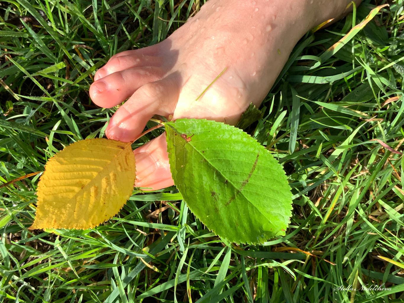 Pied dans l'herbe avec des feuilles d'automne entre les doigts