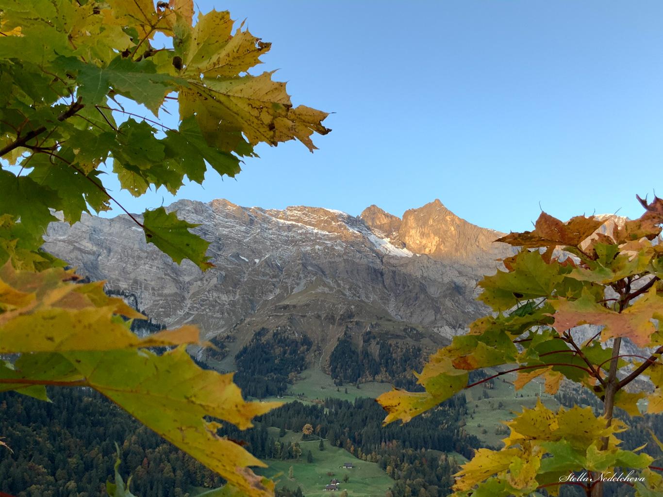 Vue sur des sommets alpins entre les feuilles d'automne