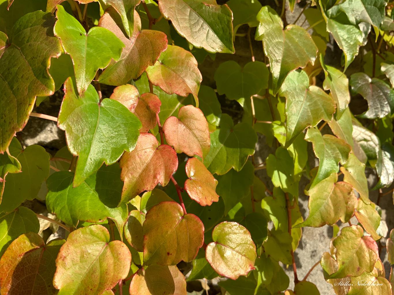 Feuilles d'automne au soleil