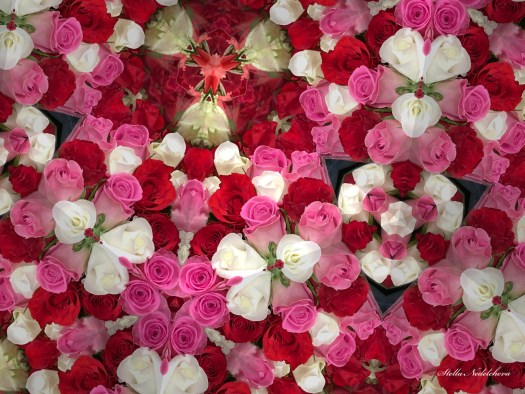 Opulence de roses