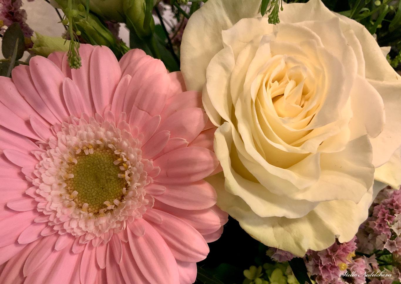 Gerbera rose et rose blanche