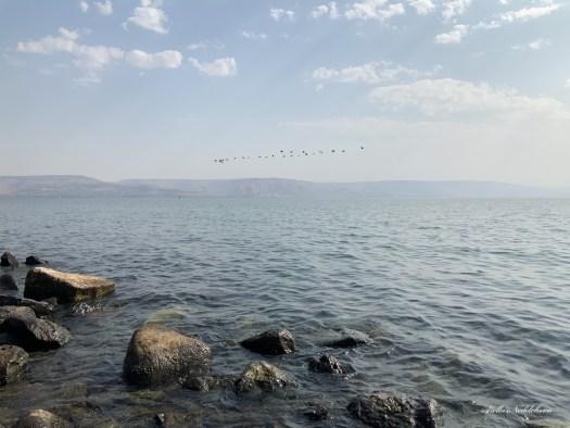 Vol d'oiseaux sur la mer de Galilée