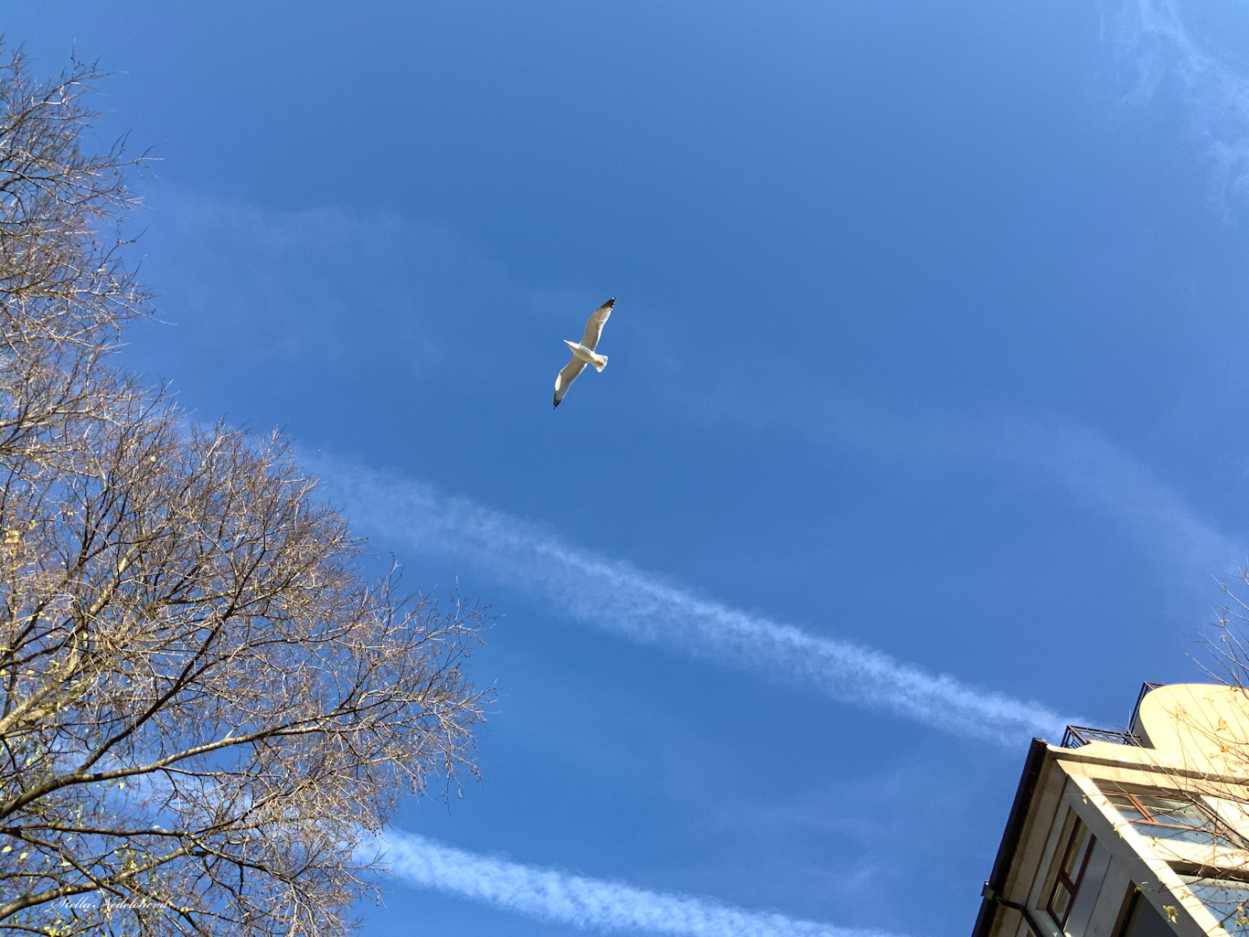 Vol d'un goéland dans le ciel