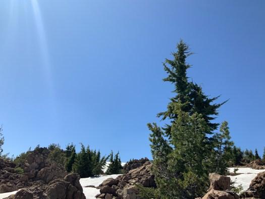 Sapin et quelques tas de neige entre les roches,