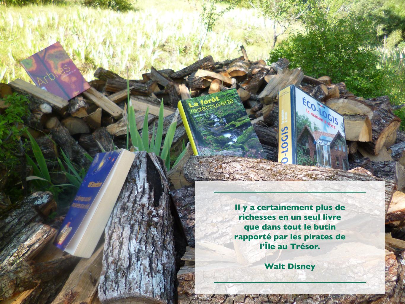 Plusieurs livres entre les bûches de bois dans la nature